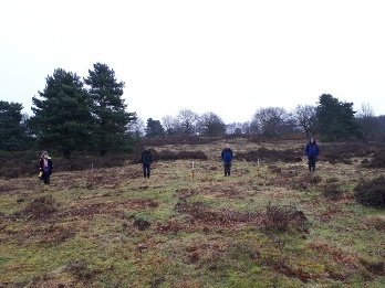 Ridge and Furrow Ploughing, Budby South Forest- Archaeology in Sherwood Forest