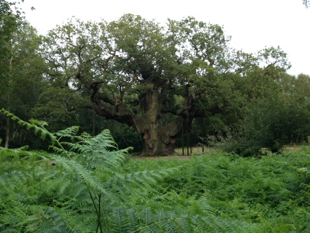 Sherwood Forest Major Oak Robin Hood Hideaway